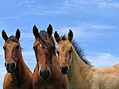 Three quarter horses