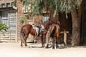 Horses in an old town