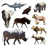 Warthog and other African animals