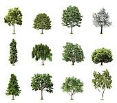 Set Trees. Vector