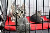Little kittens in a cage