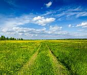 Spring summer - rural road in green field scenery lanscape