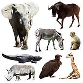 Set of few african animals