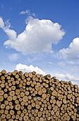 industrial timber pile log stack and sky